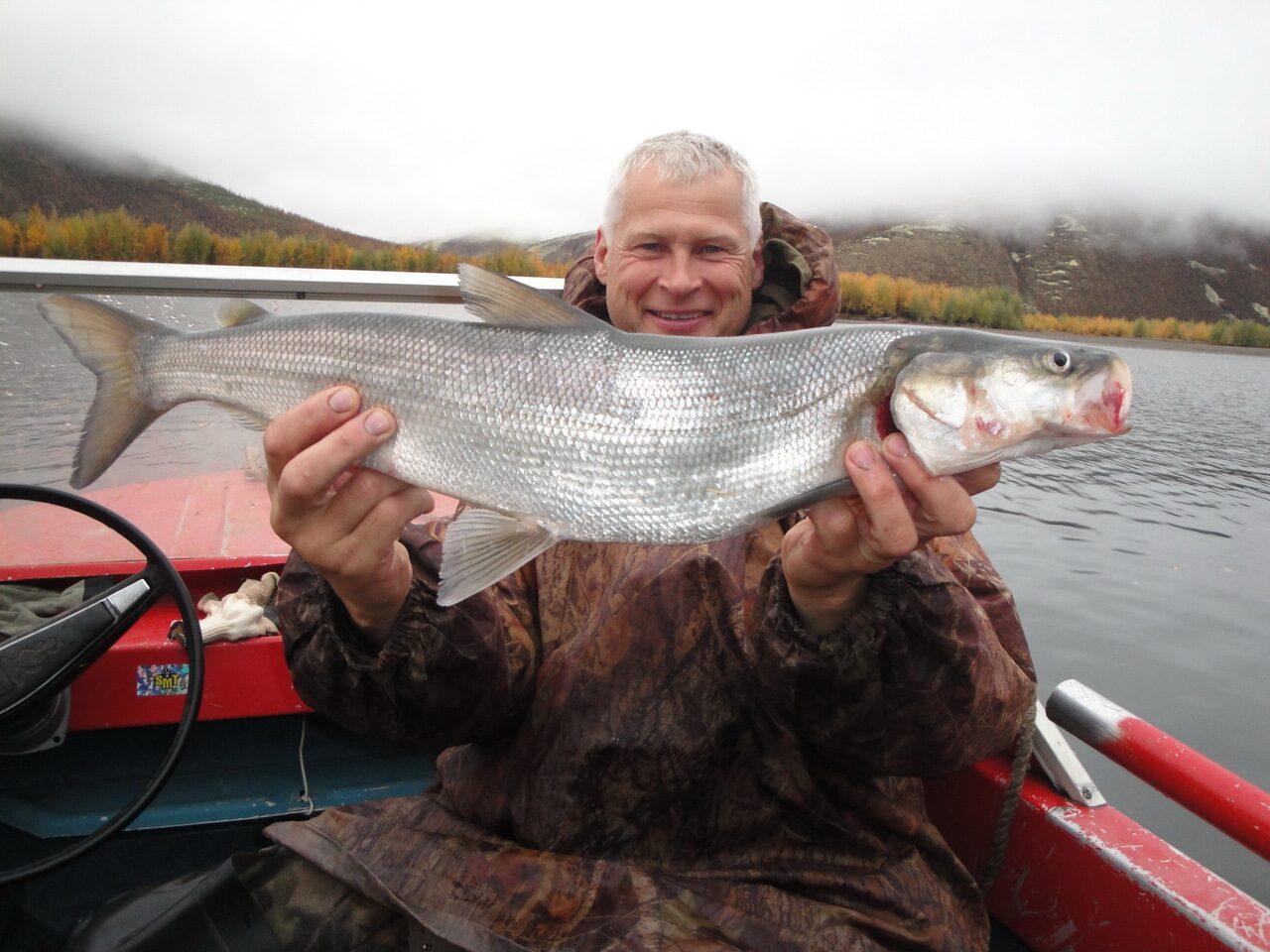 рыболовная нельма